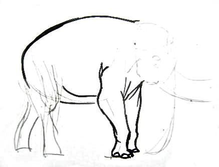 Нарисуем индийского слона