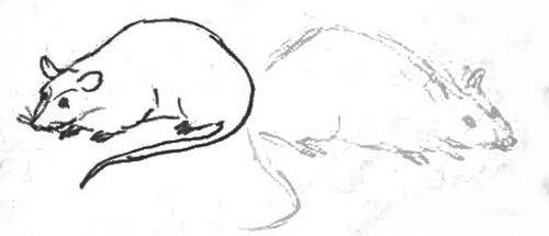 Учимся рисовать мышь