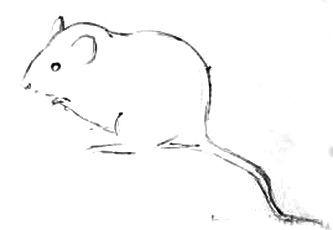 Нарисуем мышку