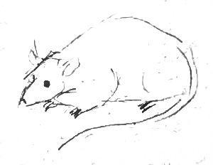 Мышь -набросок