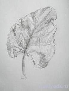 Рисунок листа растения