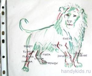 Учимся рисовать льва