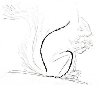 Рисуем белочку -2