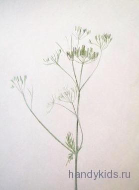 Нарисуем полевой цветок