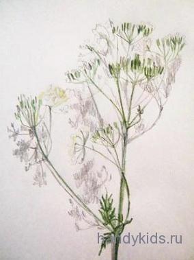 Рисунок цветка с натуры