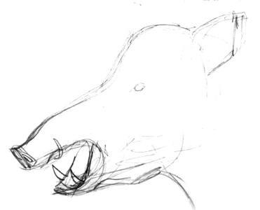 Эскиз головы кабана