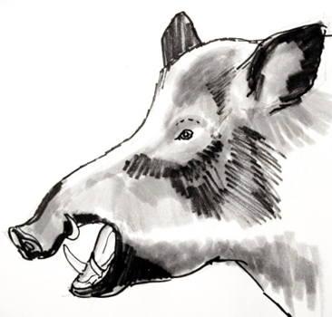 Рисунок голова кабана(вепря)