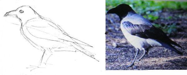 Ворона - эскиз карандашом