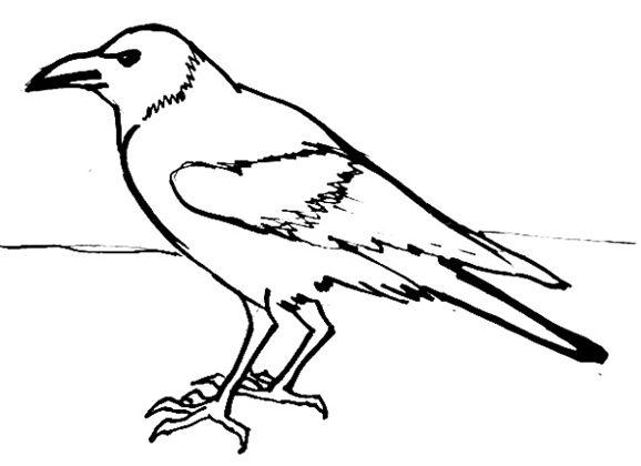 Рисунок-раскраска Ворона