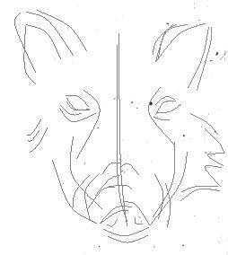 Рисуем портрет кабана