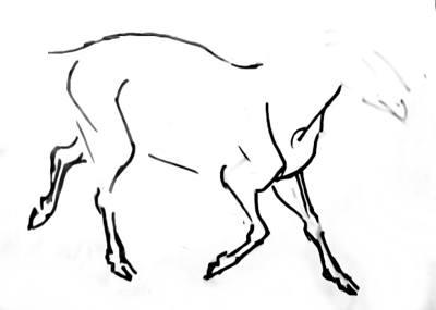 Поэтапный рисунок барана