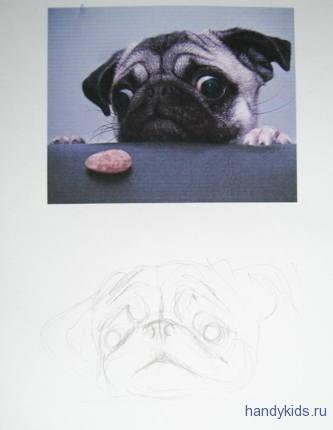 Рисуем мопса