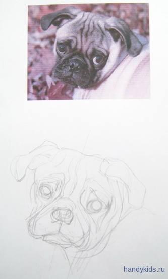 Как рисовать голову мопса