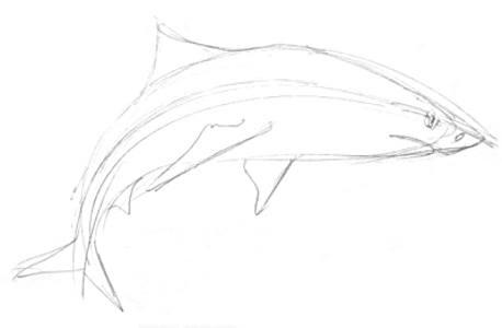 Акула -эскиз карандашом