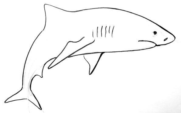 Акула рисунок 1