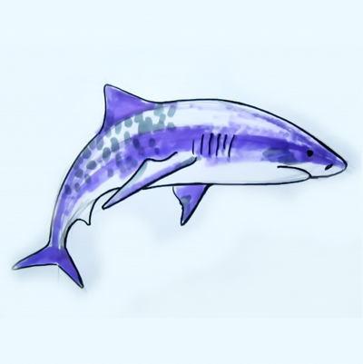 Акула -рисунок в цвете