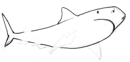 Нарисуем тигрвую акулу 13