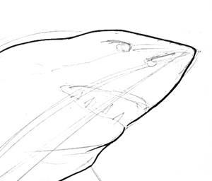 Рисуем голову акулы -17