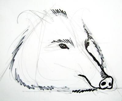 Поэтапный рисунок головы кабана