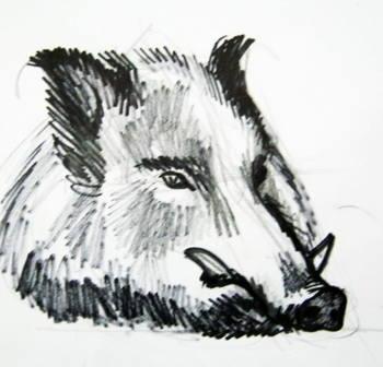 Рисунок -морда кабана