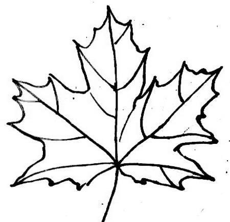Рисунок - лист клёна
