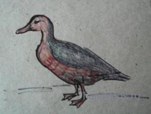 Рисунок-утка