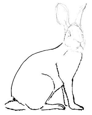 Рисуем сидящего зайца поэтапно