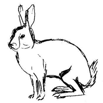 Рисунок Заяц