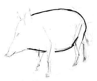 Поэтапный рисунок кабана