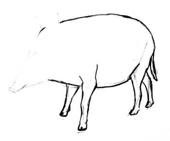 Рисуем кабана(вепря)