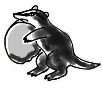 Барсук -иллюстрация