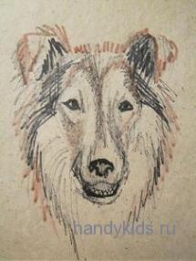 Как нарисовать морду собаки породы колли.