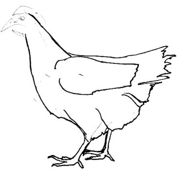 Рисуем ноги курицы-013