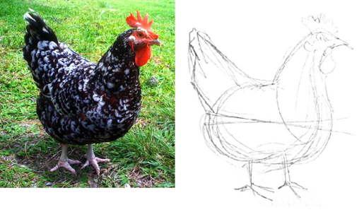 Как нарисовать курицу -2