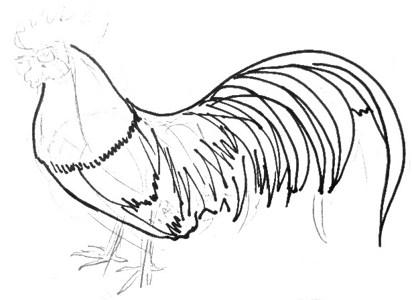 Рисуем петуха поэтапно