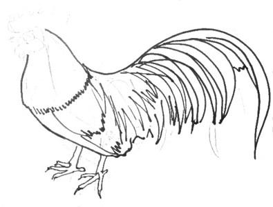 Урок поэтапного рисования петуха