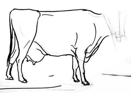 Нарисуем корову