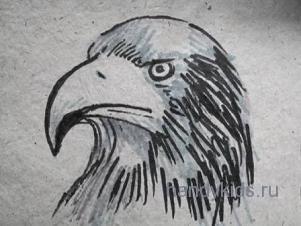 Нарисованная голова орла