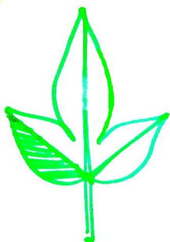 Раскраска-штриховка Лист