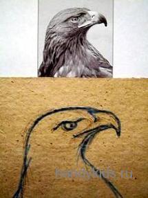 Рисуем голову орла поэтапно