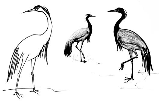 Учимся рисовать журавля