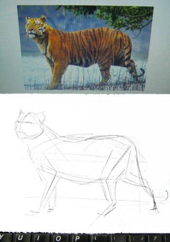 Рисуем тигра
