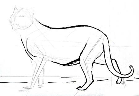 Нарисуем тигра -1