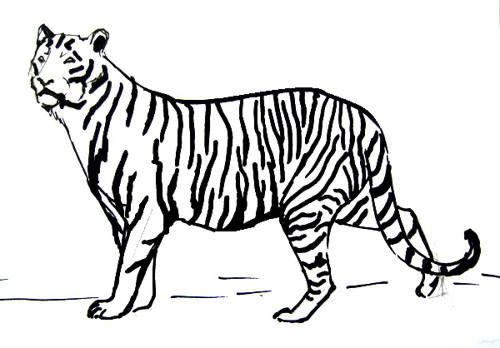 Рисунок-раскраска тигр