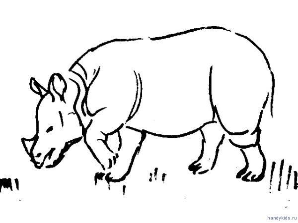 Рисунок Носорог