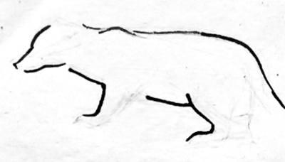 Контурный рисунок барсука