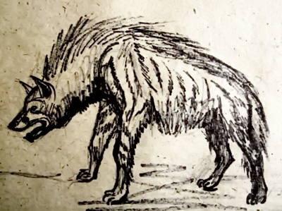 Полосатая гиена рисунок