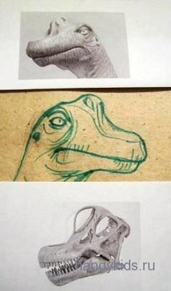 Голова брахиозавра