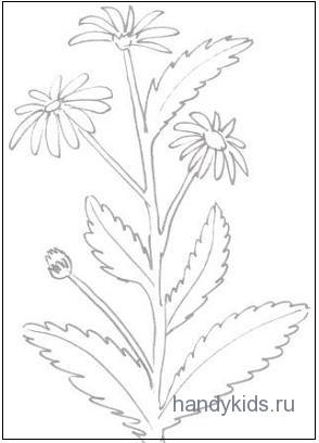 Обводилка-цветок
