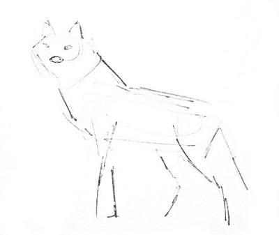 Волк -эскиз карандашом